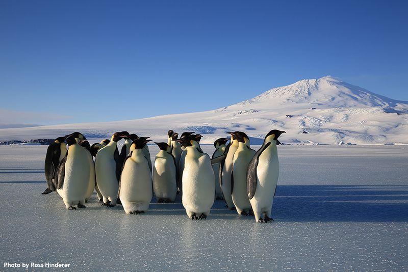 Penguinserebus