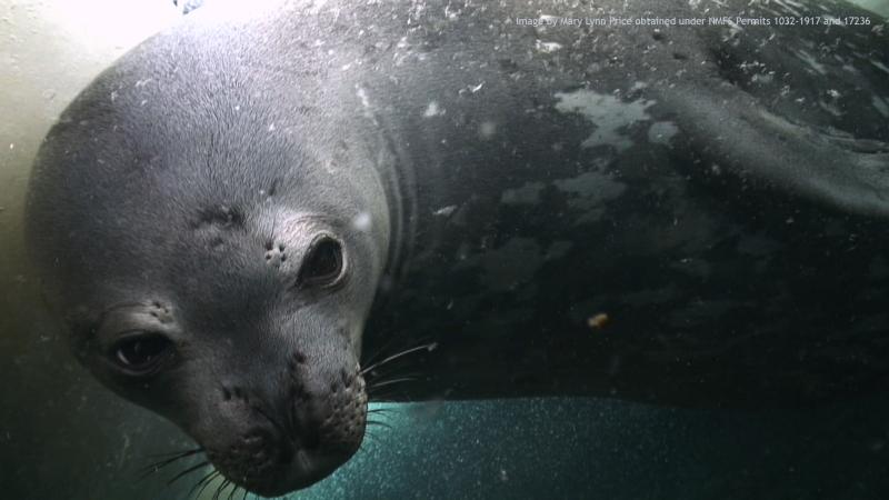 Weddell_underwater3