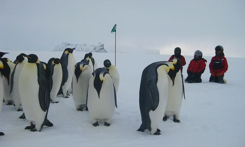 Crew-w-penguins