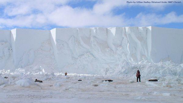 Iceberg_seals