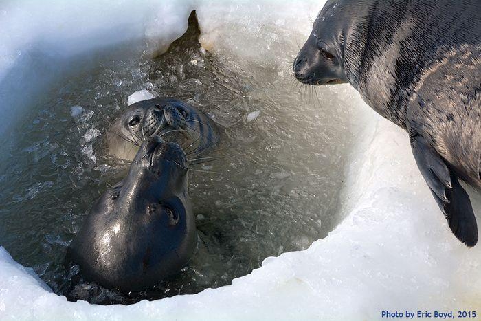 Sealsinhole
