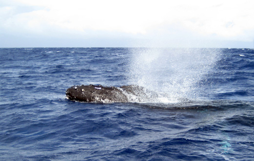 080224whales520